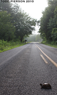 "<strong>Location:</strong> North Carolina, US<br /><strong>Author:</strong> <a href=""http://calphotos.berkeley.edu/cgi/photographer_query?where-name_full=Todd+Pierson&one=T"">Todd Pierson</a>"
