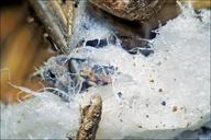 Fungi bartl?