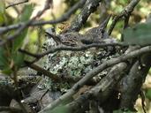 Trochilidae sp.