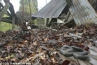 "<strong>Location:</strong> South Carolina, US<br /><strong>Author:</strong> <a href=""http://calphotos.berkeley.edu/cgi/photographer_query?where-name_full=Todd+Pierson&one=T"">Todd Pierson</a>"