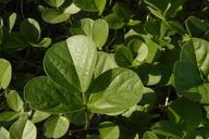 Hoita orbicularis