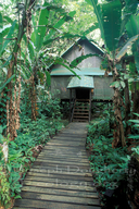 Rainforest tent with plank walkways under banana trees.