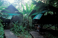 Rainforest tents with plank walkways under banana trees.