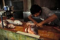 Tico man cleaning a large snapper for dinner.