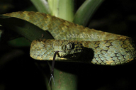 Variable Buchviper