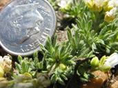 click for enlargement