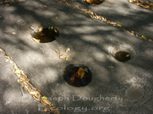 Native American grinding stones in an ancient oak grove.