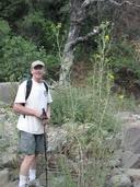 Helianthus californicus