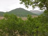 Quercus gambelii