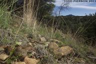 "<strong>Location:</strong> Arizona, US<br /><strong>Author:</strong> <a href=""http://calphotos.berkeley.edu/cgi/photographer_query?where-name_full=Todd+Pierson&one=T"">Todd Pierson</a>"