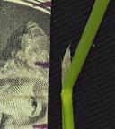 Polypogon imberbis