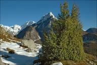 Juniperus communis ssp. communis