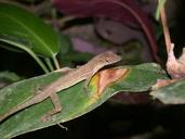 """<strong>Location:</strong> Piedras Blancas National Park (Costa Rica)<br /><strong>Author:</strong> <a href=""""http://calphotos.berkeley.edu/cgi/photographer_query?where-name_full=Shawn+Mallan&one=T"""">Shawn Mallan</a>"""