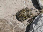 "<strong>Location:</strong> Bonifacio (Corsica (Tyrrhenian Islands), France)<br /><strong>Author:</strong> <a href=""http://calphotos.berkeley.edu/cgi/photographer_query?where-name_full=Simon+J.+Tonge&one=T"">Simon J. Tonge</a>"