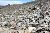 Pohlia tundrae