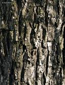Salix amygdaloides