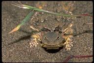 """<strong>Location:</strong> Morro Bay (San Luis Obispo County, California, US)<br /><strong>Author:</strong> <a href=""""http://calphotos.berkeley.edu/cgi/photographer_query?where-name_full=Gerald+and+Buff+Corsi&one=T"""">Gerald and Buff Corsi</a>"""
