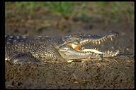 "<strong>Location:</strong> Kakadu National Park (Australia)<br /><strong>Author:</strong> <a href=""http://calphotos.berkeley.edu/cgi/photographer_query?where-name_full=Gerald+and+Buff+Corsi&one=T"">Gerald and Buff Corsi</a>"