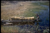 Man poling dugout loaded with reeds