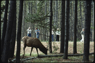 Photographers and elk