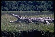 """<strong>Location:</strong> Murchison Falls National Park (Uganda)<br /><strong>Author:</strong> <a href=""""http://calphotos.berkeley.edu/cgi/photographer_query?where-name_full=Arthur+J.+Emmrich&one=T"""">Arthur J. Emmrich</a>"""