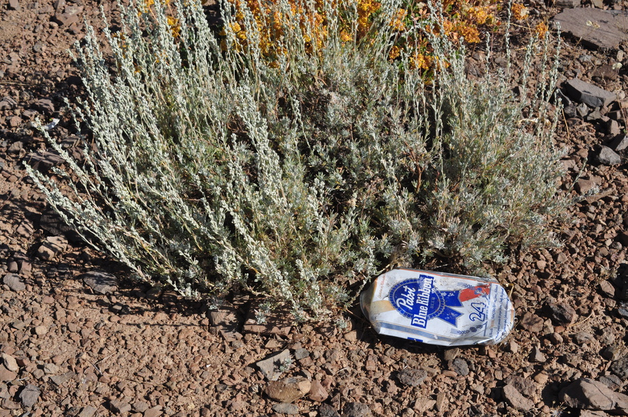 Artemisia arbuscula ssp. thermopola