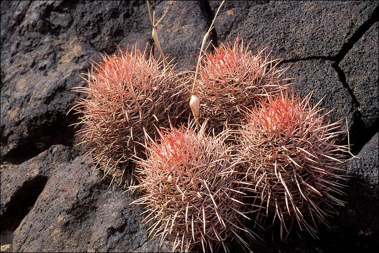 Kaktusi - Page 2 0949