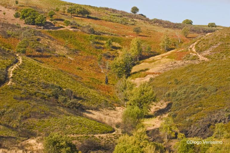 Calphotos montesinho natural park portugal - Natura portugal ...