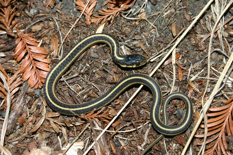 Field Herp Forum View Topic Exploring The Northern