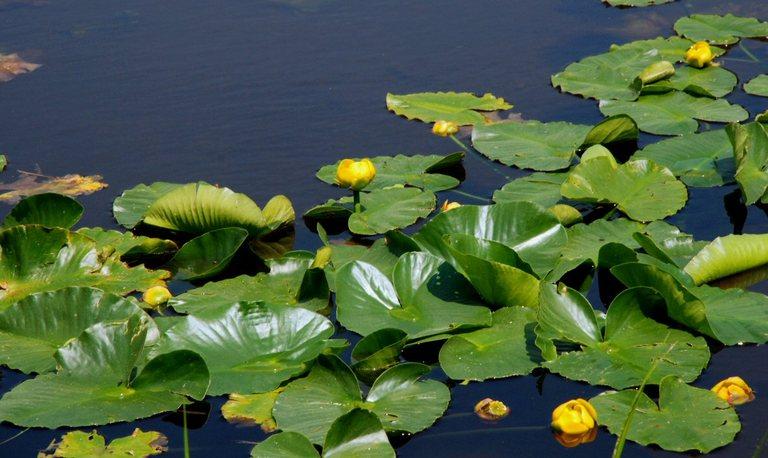 Макаровский пруд рыбалка и отдых