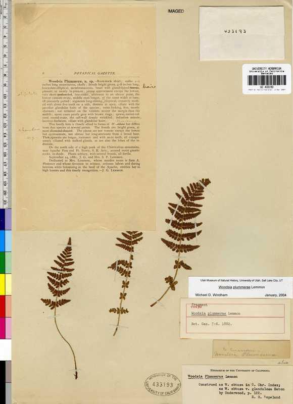 Woodsia plummerae